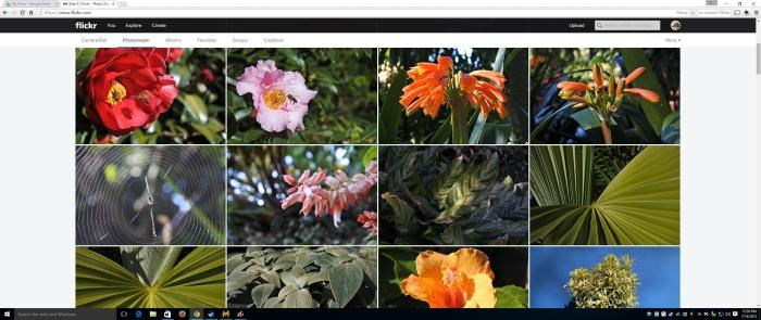 What a wide view of a Flickr photo wall looks like on this monitor.
